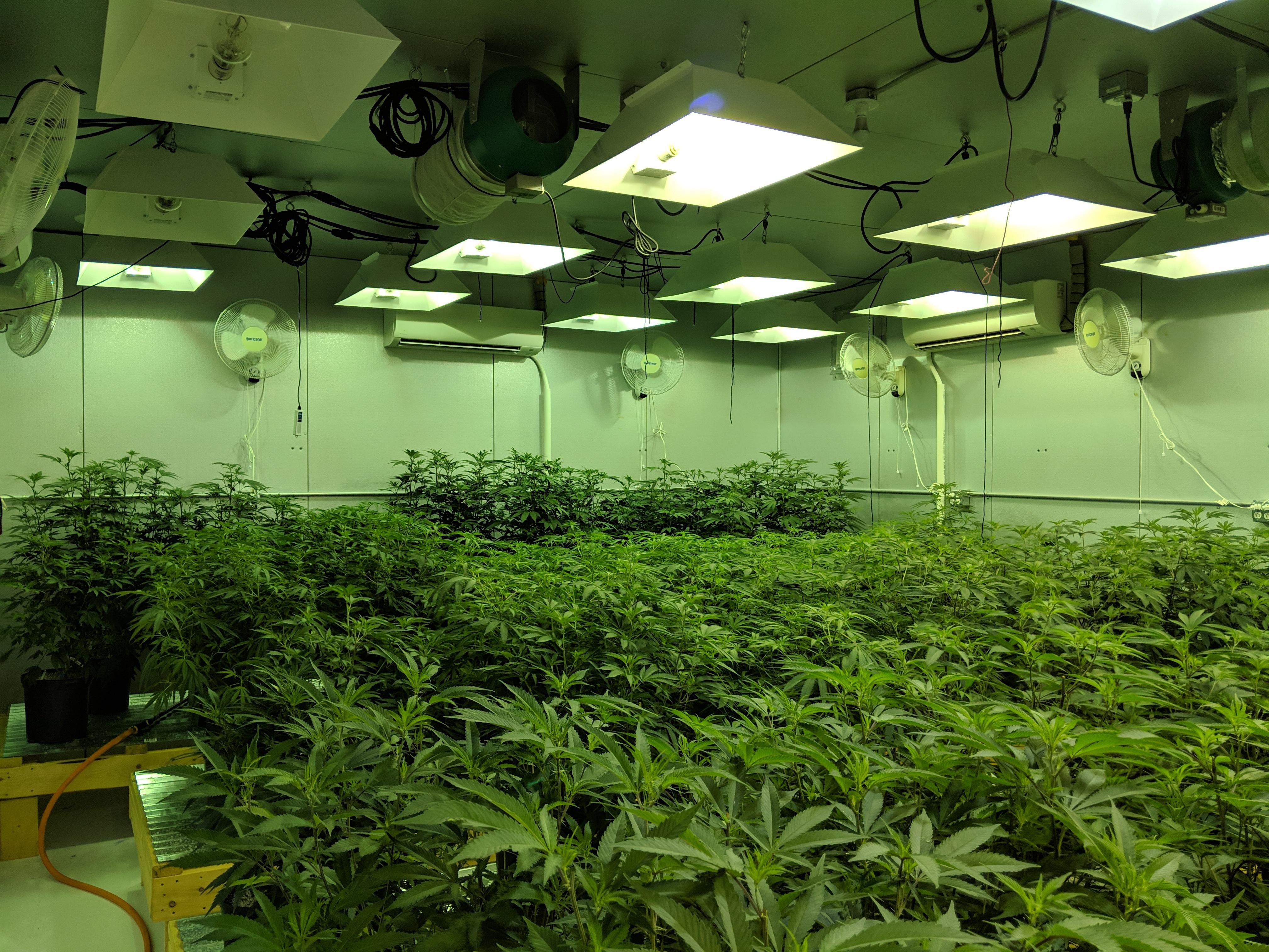 Maine Marijuana - Craft Maine Marijuana & Cannabis Strains at Zero Gravity Cannabis