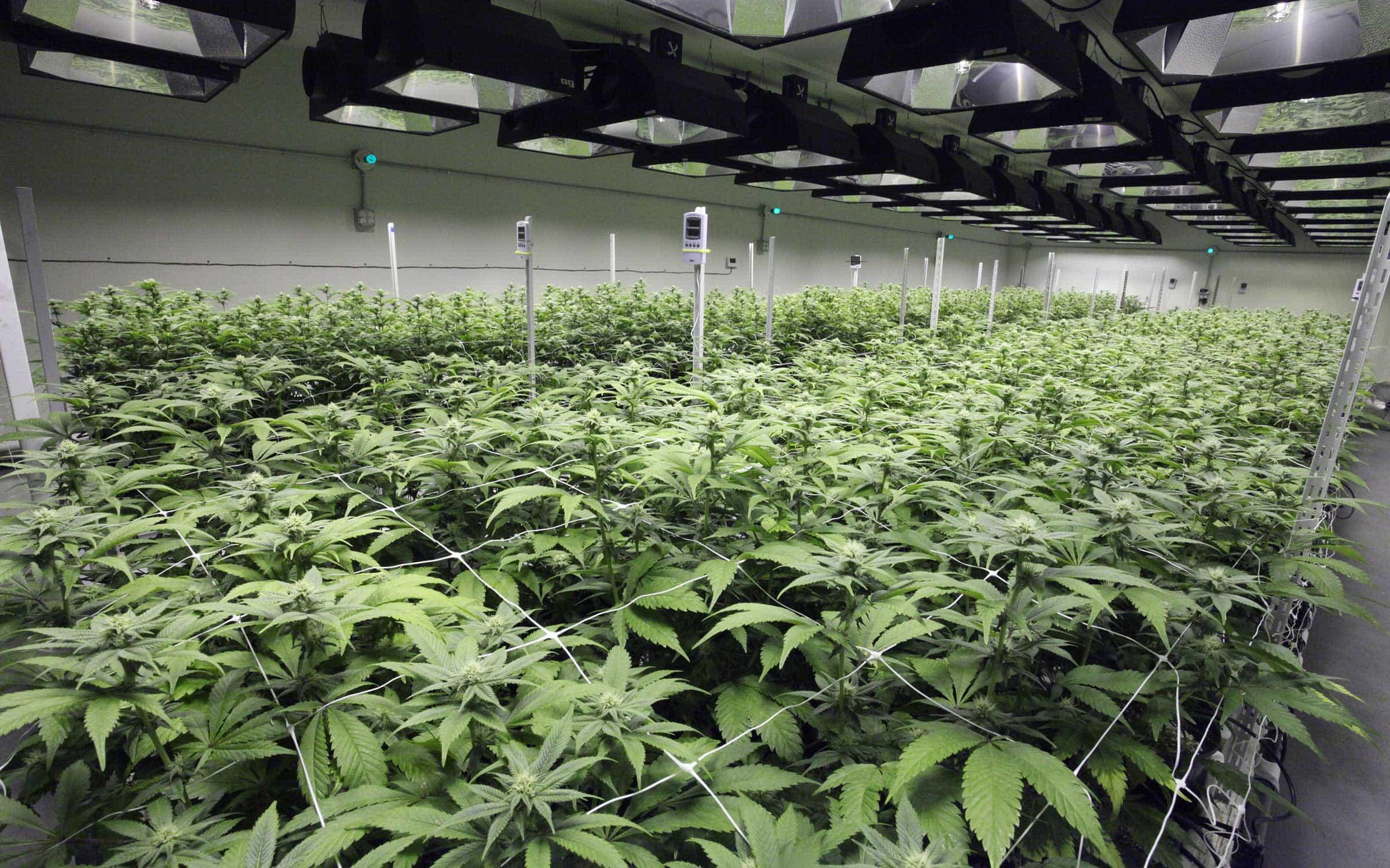Гидропоника конопля сколько дней в крови содержится марихуана