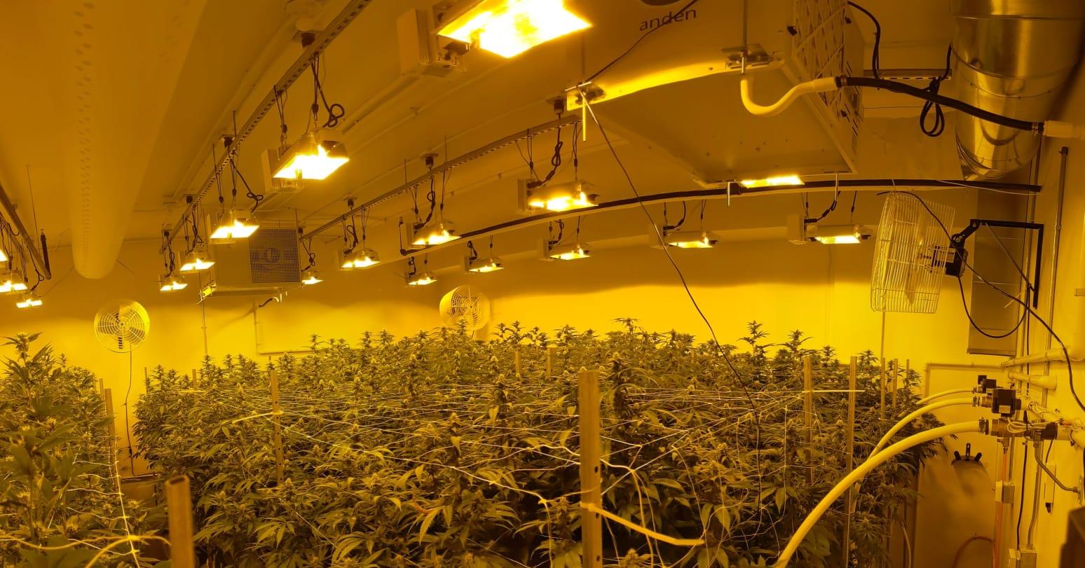 zero gravity cannabis cultivation